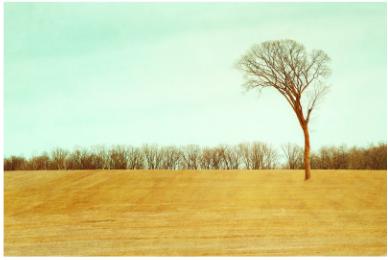 Laura Grisamore Spirit Tree Photo